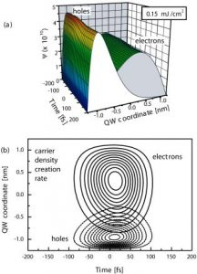 Role of dynamical screening in excitation kinetics of biased quantum wells: Nonlinear absorption and ultrabroadband terahertz emission